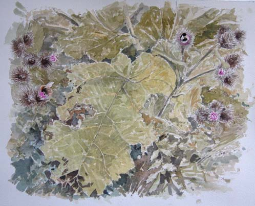 William Neill Wildlife and Landscape Artist - South Uist - Outer Hebrides - Bumblebees
