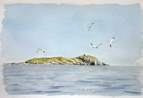 William Neill Wildlife and Landscape Artist - South Uist - Outer Hebrides - Gannets