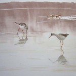 William Neill Wildlife and Landscape Artist - South Uist - Outer Hebrides - Redshank