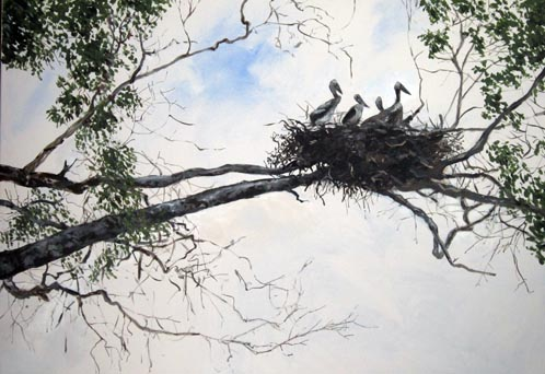 William Neill Wildlife and Landscape Artist - South Uist - Outer Hebrides - Jabiru Nest, Guyana