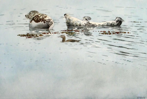 William Neill - Wildlife and Landscape Artist - South Uist