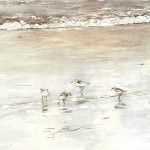 William Neill Wildlife and Landscape Artist - South Uist - Outer Hebrides - Sanderling