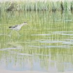 William Neill Wildlife and Landscape Artist - South Uist - Outer Hebrides - Greenshank