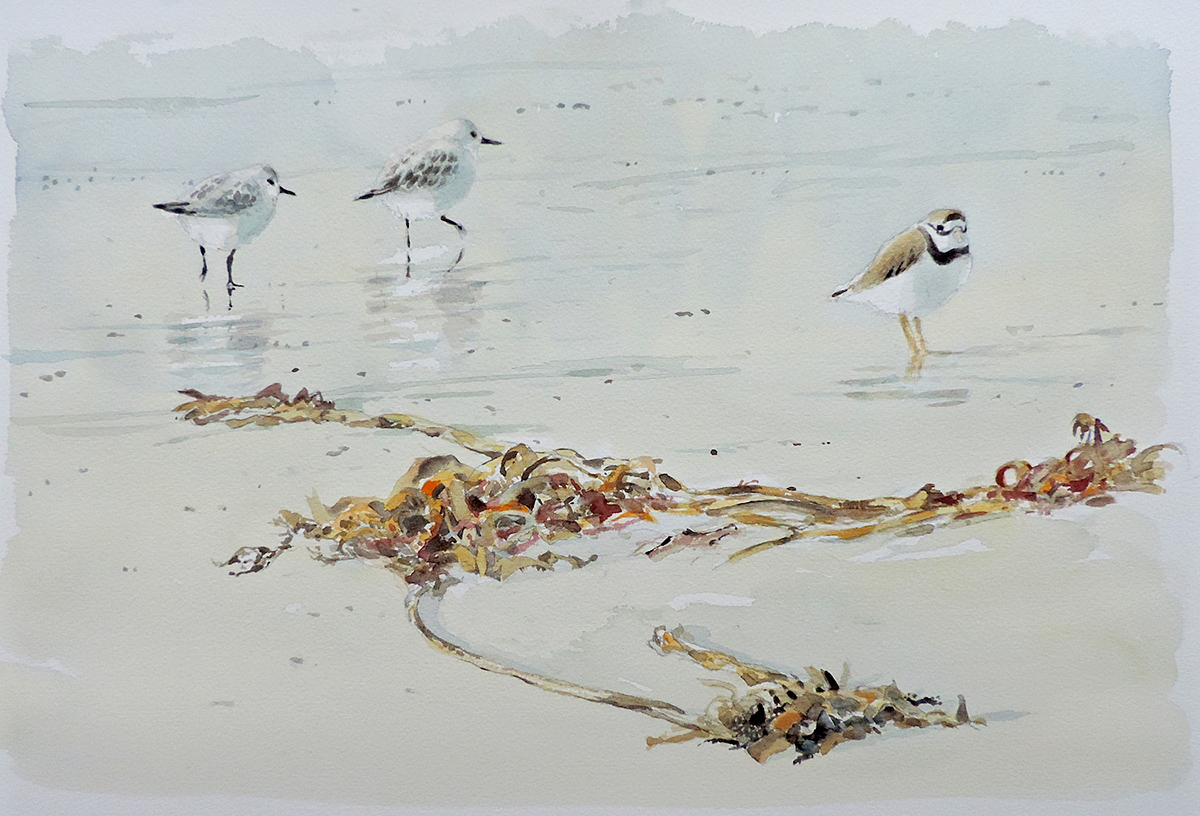 William Neill Wildlife and Landscape Artist - South Uist - Outer Hebrides - On the Beach