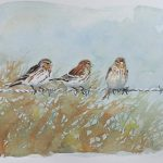 William Neill Wildlife and Landscape Artist - South Uist - Outer Hebrides - Twite